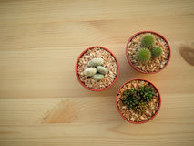 Raccolta della famiglia di cactus Fotografie Stock