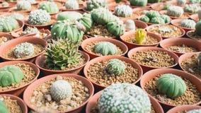 Raccolta della famiglia di cactus Immagini Stock
