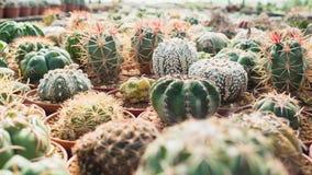 Raccolta della famiglia di cactus Fotografie Stock Libere da Diritti