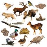 Raccolta della fauna selvatica sopra bianco Immagine Stock