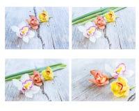 Raccolta della fine dell'orchidea del fiore del cymbidium su Immagini Stock