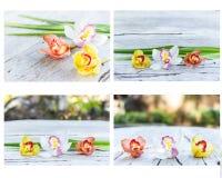 Raccolta della fine dell'orchidea del fiore del cymbidium su Immagine Stock