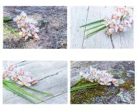 Raccolta della fine dell'orchidea del fiore del cymbidium su Immagini Stock Libere da Diritti