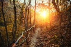 Raccolta della foresta di autunno Fotografia Stock