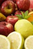 Raccolta della frutta Fotografie Stock Libere da Diritti