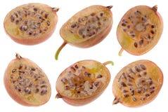 Raccolta della frutta dell'uva spina Fotografia Stock