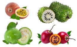 Raccolta della frutta fresca isolata su bianco Fotografia Stock Libera da Diritti