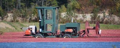 Raccolta della gestione delle acque dell'azienda agricola del mirtillo rosso fotografia stock libera da diritti