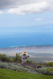 Raccolta della lavanda in Maui Fotografia Stock