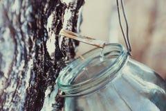 Raccolta della linfa della betulla nel barattolo fotografia stock