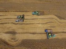 Raccolta della mietitrice del grano Grano agricolo del raccolto delle macchine Fotografia Stock Libera da Diritti