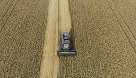 Raccolta della mietitrice del grano Grano agricolo del raccolto delle macchine Immagine Stock Libera da Diritti