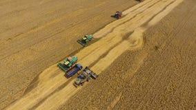 Raccolta della mietitrice del grano Grano agricolo del raccolto delle macchine sul campo fotografia stock libera da diritti