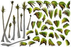 Raccolta della palma Immagini Stock Libere da Diritti
