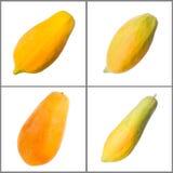 Raccolta della papaia Immagine Stock