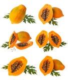 Raccolta della papaia Immagini Stock