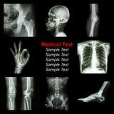 Raccolta della parte dei raggi x dell'essere umano Immagini Stock