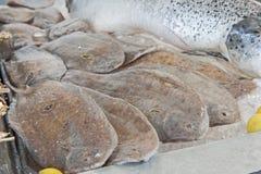 Raccolta della passera di mare fresca nel ristorante dei frutti di mare Fotografia Stock