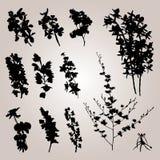 Raccolta 0060 della pianta Fotografia Stock