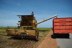 Raccolta della risaia Fotografia Stock Libera da Diritti