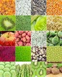 Raccolta della verdura e della frutta Fotografie Stock Libere da Diritti