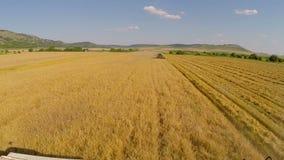 Raccolta della vista aerea del grano video d archivio