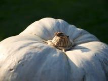 Raccolta della zucca Zucche di Halloween Fondo rustico rurale di autunno con zucca Fotografie Stock
