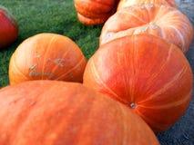 Raccolta della zucca Zucche di Halloween Fondo rustico rurale di autunno con zucca Fotografie Stock Libere da Diritti