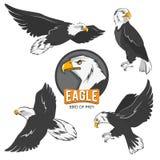 Raccolta delle aquile del fumetto Isolato degli uccelli di volo su bianco Immagini Stock
