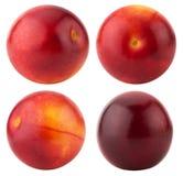 Raccolta delle ciliege susine rosse isolate sui precedenti bianchi Immagini Stock