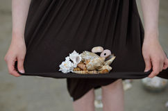 Raccolta delle conchiglie Fotografie Stock