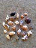 Raccolta delle conchiglie differenti e delle lumache marine Fotografie Stock