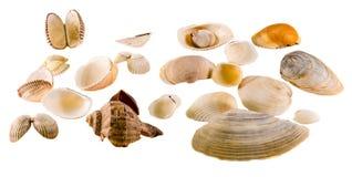 Raccolta delle coperture colorate mare, fine su isolate, fondo bianco Immagine Stock
