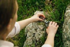 Raccolta delle erbe della montagna per tè fotografia stock libera da diritti