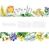 Raccolta delle erbe e delle piante mediche disegnate a mano Fotografia Stock