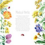 Raccolta delle erbe e delle piante mediche disegnate a mano Immagini Stock Libere da Diritti