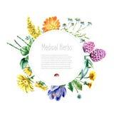 Raccolta delle erbe e delle piante mediche disegnate a mano Immagine Stock Libera da Diritti