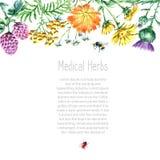 Raccolta delle erbe e delle piante mediche disegnate a mano Fotografie Stock