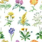 Raccolta delle erbe e delle piante mediche disegnate a mano Reticolo senza giunte Immagini Stock Libere da Diritti