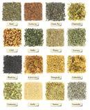 Raccolta delle erbe e delle spezie Fotografia Stock