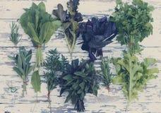 Raccolta delle erbe fresche, tinta Immagini Stock Libere da Diritti