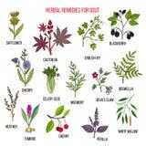 Raccolta delle erbe naturali per la gotta illustrazione di stock