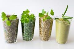 Raccolta delle erbe secche e fresche - da sinistra: maggiorane, parsl Fotografia Stock