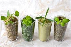 Raccolta delle erbe secche e fresche - da sinistra: origano, parsle Fotografie Stock Libere da Diritti