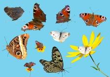 Raccolta delle farfalle isolate & di x28; fotografia, conditi naturale Immagine Stock