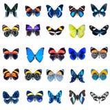 Raccolta delle farfalle su un fondo bianco Fotografia Stock Libera da Diritti