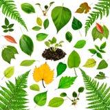 Raccolta delle foglie Fotografia Stock Libera da Diritti