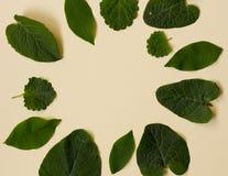 Raccolta delle foglie del giardino isolate sul fondo della crema Fotografia Stock