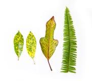 Raccolta delle foglie del giardino su fondo bianco Immagini Stock