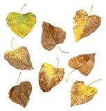 Raccolta delle foglie di autunno differenti Fotografia Stock
